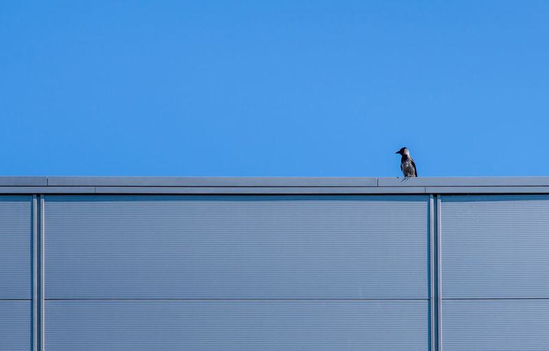 Low angle view of bird on roof against clear blue sky