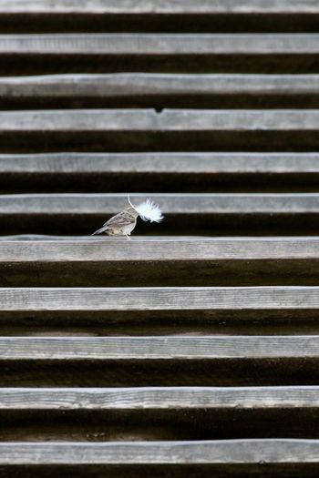 Animal Themes Bird Building A Nest Carrying In Mouth Day Feather  Little Big No People Outdoors Sparrow Stairsteps Stairway