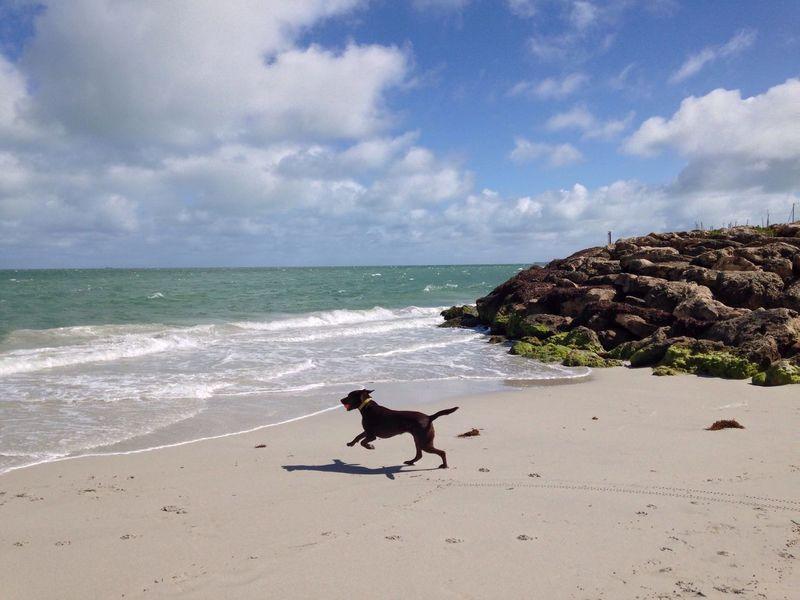 Dog Dog And Sea Dog Running Domestic Animals Animal Themes Playful Dog Beach Sea Shore