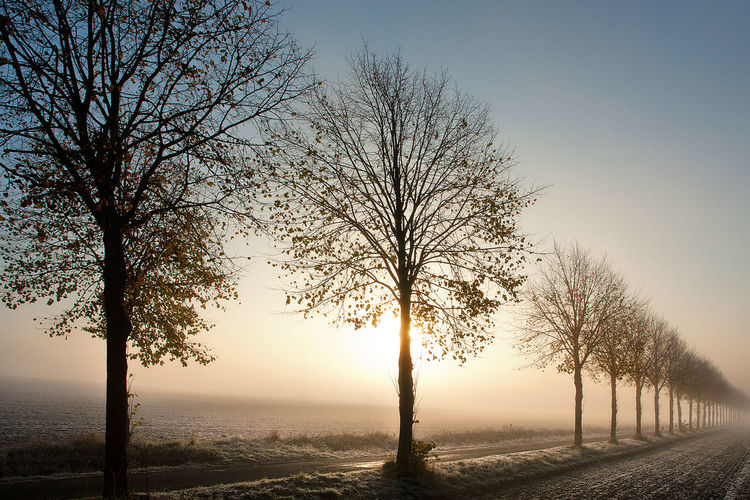 Baumreihe Im Nebel Fields Frost On The Ground Frosty Morning Haze Hazy Sunlight Herbstmorgen Line Of Trees Line Of Trees In Fog Misty Misty Mornings Misty Sunrise Morning Light Nature Nebel No People Outdoors Sonnenaufgang Im Nebel Sun Behind The Tree Sunrise Trees