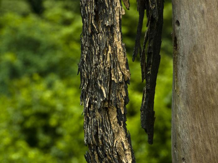 Tree bark in