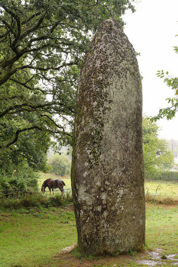 View of an animal on tree trunk