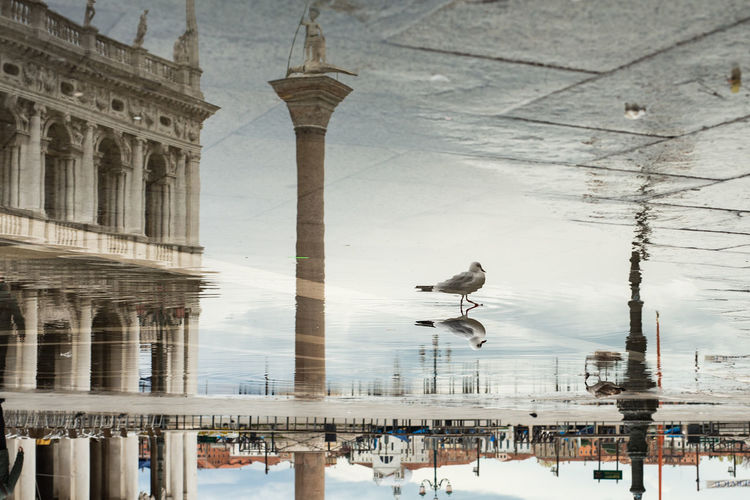 Digital composite image of seagull flying over water