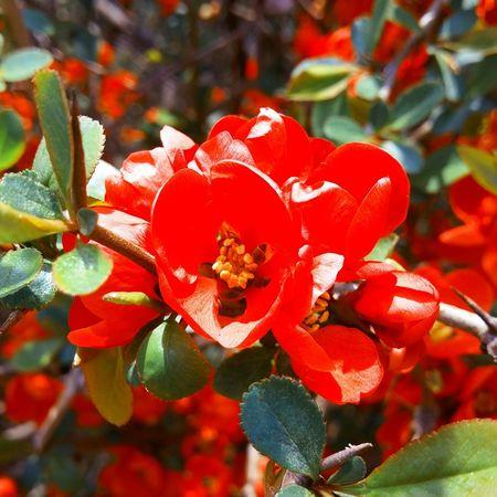 Flower 일상 Gpro2 Daliy Snap 꽃