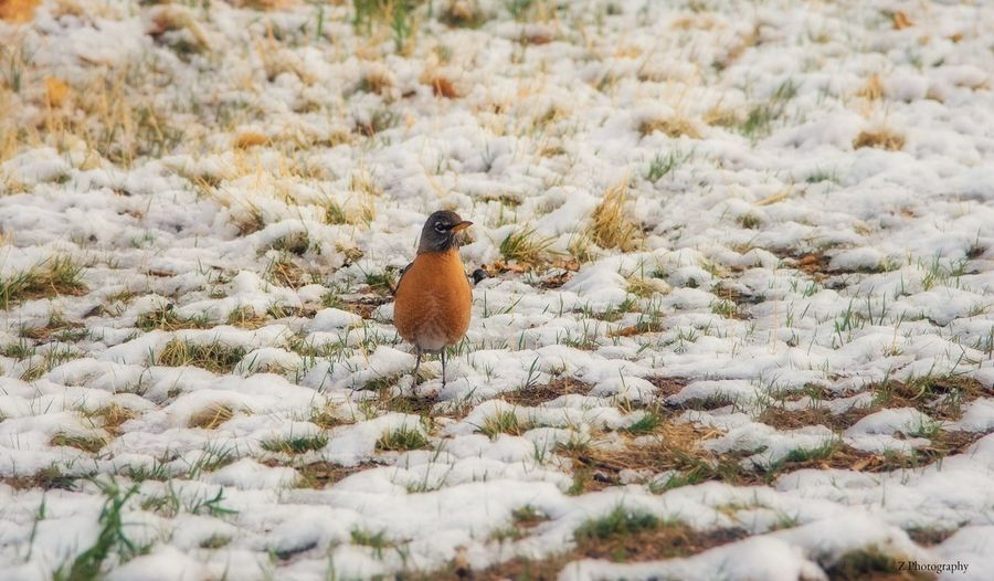 EyeEm Selects Snow Cold Temperature Nature No People Field Plant Winter Land Animals In The Wild Day Animal Covering Animal Wildlife Beauty In Nature Animal Themes One Animal Growth Bird White Color