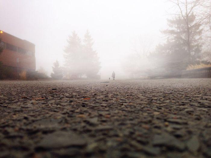 Good (Foggy)