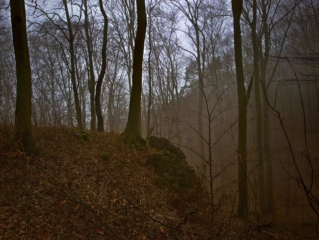 Moravian forest EyeEm Nature Lover EyeEmNewHere Wilderness Wilderness Area Czech Republic Rock Trees Bare Tree Beauty In Nature Branch Foggy Foggy Day Forest Forest Photography Forest Trees Landscape Moravian Moravian Karst Nature No People Outdoors Tree Tree Trunk WoodLand