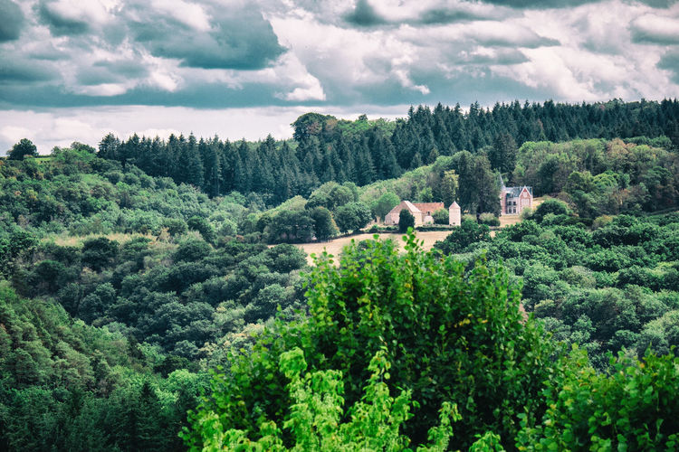High angle view of trees in forest against sky