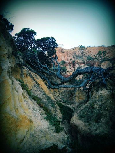 Hanging Out Taking Photos Check This Out Relaxing Enjoying Life Afternoon Tree_collection  Tree By The Sea Rocky Coastline