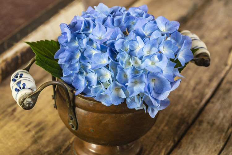 Close-up of blue flower in pot