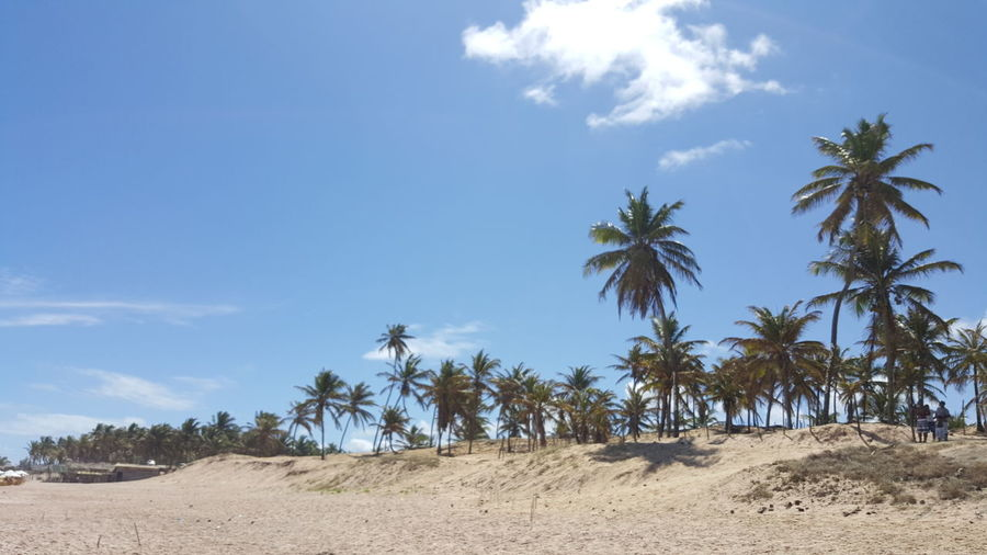 Palm Tree Tree Sand Nature Sky Cloud - Sky Landscape Beach Blue Travel Destinations Day Desert Scenics No People Outdoors Bahia/brazil Bahia Litoral Norte Litoral Norte Bahia Linha Verde Santo Antonio