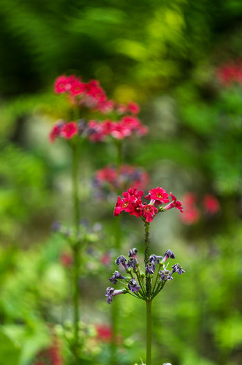Beauty In Nature Blooming Close-up Day Flower Flower Collection Flower Head Flowers Focus On Foreground Fragility Freshness Green Color Growth Nature No People Outdoors Petal Pink Color Plant Red