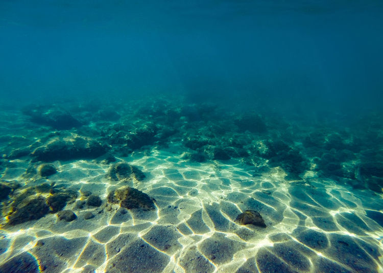 Water Sea Underwater UnderSea Nature No People Tranquility Blue Beauty In Nature Sea Life Turquoise Colored Day Animal Outdoors Rippled Sand Transparent Ocean Floor Pattern Marine Purity