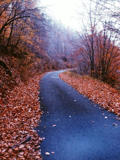 Autumn Leaves Road Forest