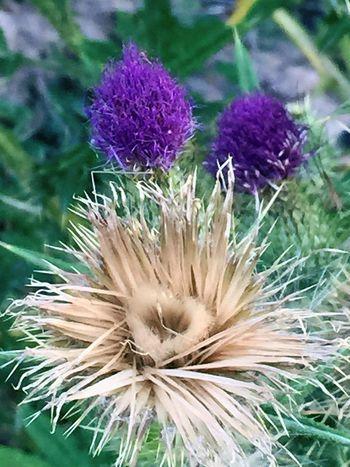 Flowers EyeEm Nature Lover weeds Secret Garden