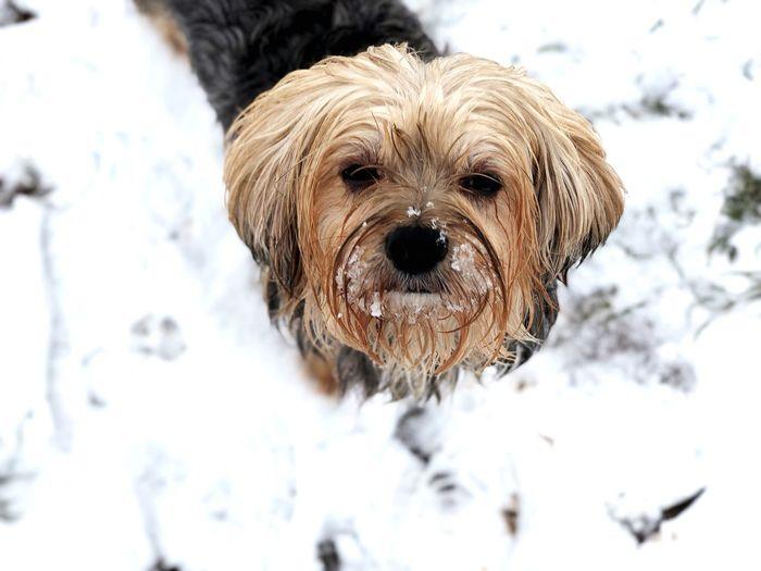 Snowdog EyeEm