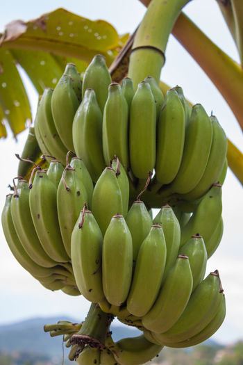 Low angle view of bananas against sky