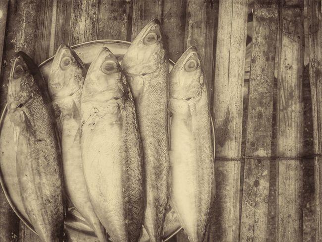 Fish Food Mackerel Mackerel Fish