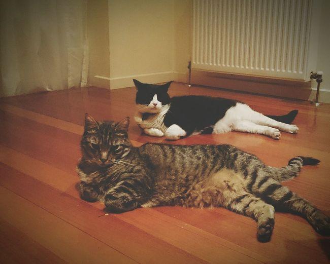 Cat Cats Cute Pets Pets Twins Relaxing Cheese! Hi! Best Friends