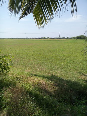 India Beauty In Nature Landscape Green Color Agriculture