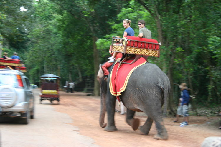 Angkor Wat, Temples, Kmer Culture Cambodia Elephant Monument Travel Destinations Travel Destinations Outdoors Relaxation Travel Photography Traveling Travelling Travelphotography UNESCO World Heritage Site