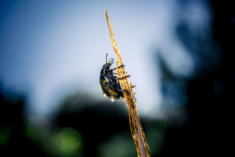 Close-up of wet bug on twig against sky
