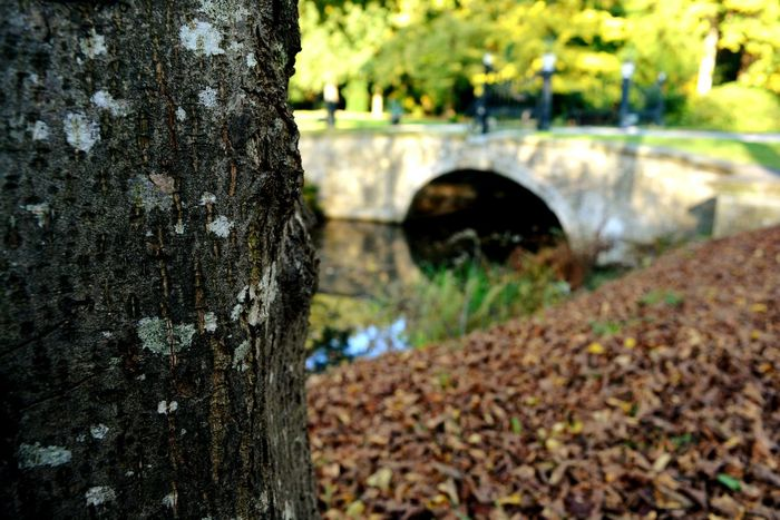 Tree Outdoors Nature No People Day Close-up Autumn Collection Eeyem Photography EyeEm Nature Lover Autumn Walking Around Countryside Autumn Colors Beauty In Nature Tree Water Lake Brick Wall Bridge EyeEm Best Shots Nature Leaf Textured  Growth Tranquility Tranquil Scene