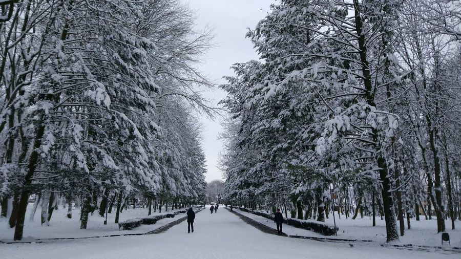 Tree Tree Area Snow Cold Temperature Winter Forest Snowing Polar Climate Branch Frozen Water Evergreen Tree Pinaceae Snowdrift Deep Snow Spruce Tree Pine Woodland