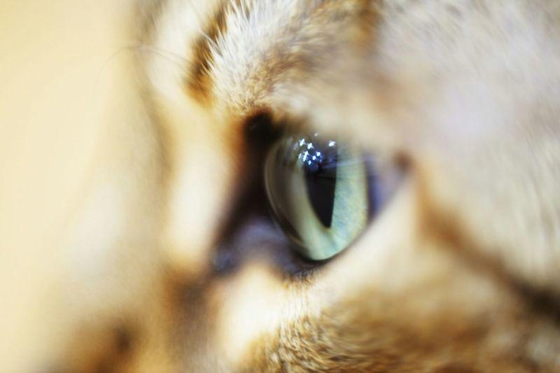 eye of a tig..