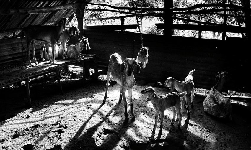 Family Time Art Artistic Expression Billy Goat Creative Light and Shadow Beauty In Nature Love Art is Everywhere Blackandwhite Photography Travel Travel Photography Goats Life Animals Art Gallery Frames Silhouette_collection Street Art The Photojournalist - 2018 EyeEm Awards Capture Tomorrow
