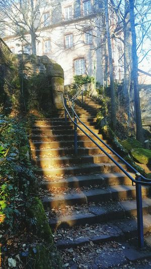 Tree Growth Outdoors No People Day Nature Architecture Alsace Odile Mont Odile Monastery History Building Exterior Stairs