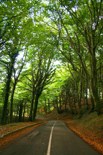 Calabria (Italy) Beauty In Nature Calabria Crocetta Day Diminishing Perspective Direction Empty Road Forest Green Color Growth Land Long Nature No People Outdoors Paola Plant Road The Way Forward Tranquil Scene Tranquility Transportation Tree Tree Trunk Treelined Trunk