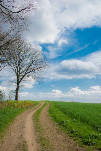Landscape Nature TheVille