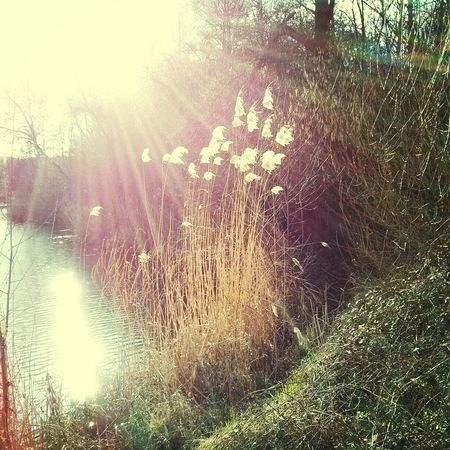 Sun Light at the Lake shore in early Spring