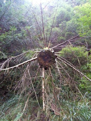 Woods Wood Log Stamm Baum Ast äste Zweig Zweige Wald Tree Tree Trunk Myst Nebel Nebelig