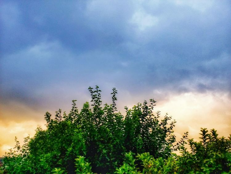 Beauty In Nature Growth Outdoors Sky Nature Sunset No People Plant Close-up Low Angle View Cloud - Sky Tree Day MotoE Moto E Motorolaphotography Motorola Photography