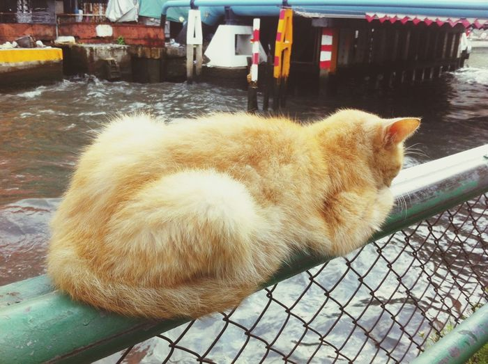 Close-up of cat by water