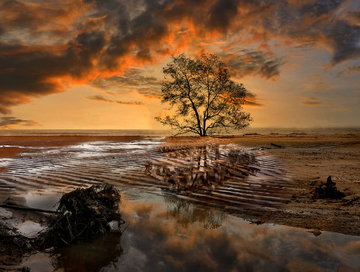sunset at Tanjung beach Sky Water Sunset Cloud - Sky Beauty In Nature Tree Scenics - Nature Tranquility Orange Color Plant Tranquil Scene Reflection Nature Sea Land Non-urban Scene No People Idyllic Beach Outdoors Horizon Over Water Tree Sunset