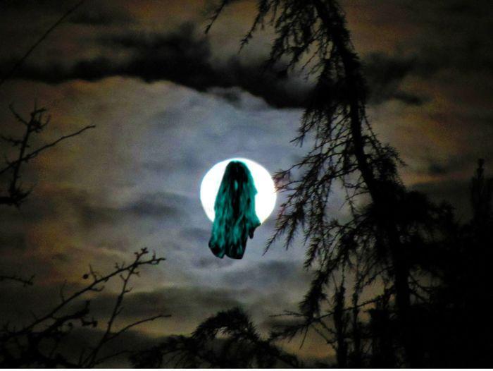 Freyja Halloween Moon Moonlight