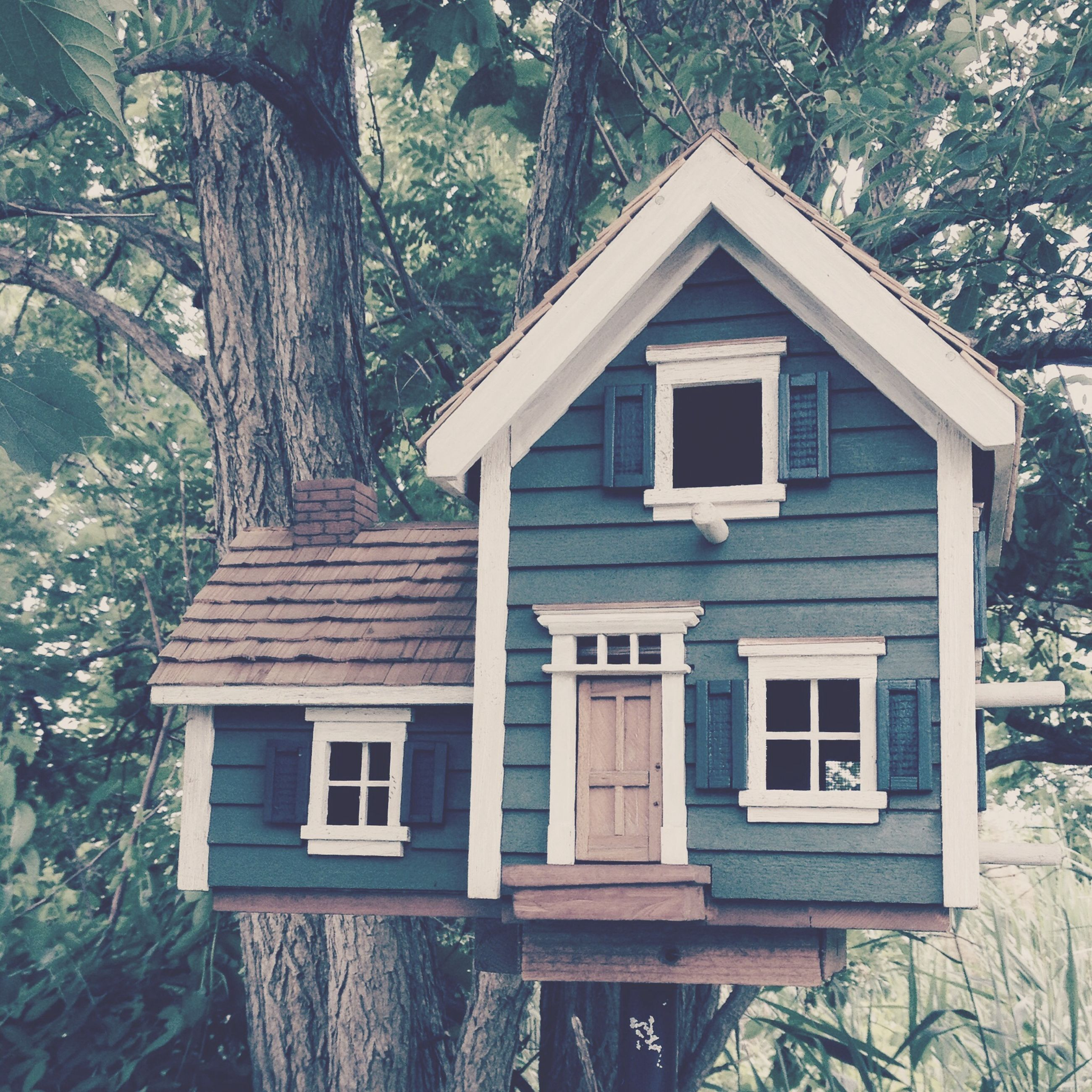 building exterior, built structure, architecture, tree, window, house, residential structure, sunlight, wood - material, growth, day, residential building, tree trunk, no people, outdoors, nature, low angle view, branch, plant, front or back yard