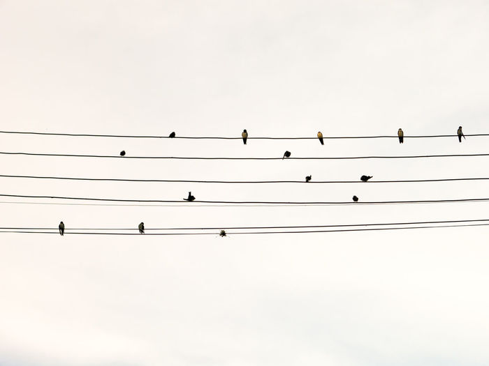 Wire Birds Tablature Partiture Sheet Music Sheets Music Music Notes Freedom Conceptual Nature Electric Wires Electric Wire Electricity