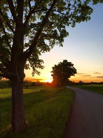 Sunset Nature Outdoors