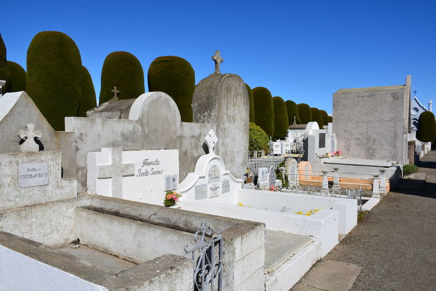 Christian cemetery and plants Cemetery Cemetery Photography Christian Cemetery Christianity Graveyard Beauty Cemeteryscape Graveyard Plants In Cemetery