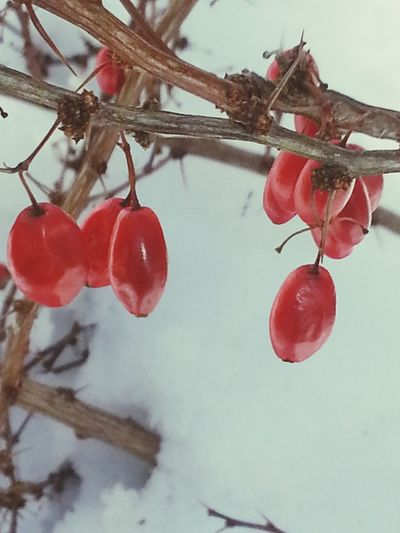 Snow ❄ Red Winter