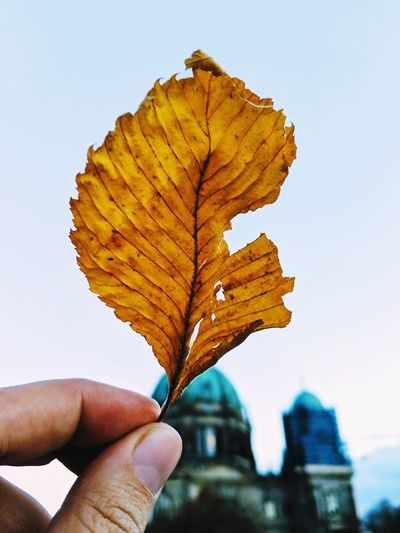 Close-up of hand holding autumn leaf against sky