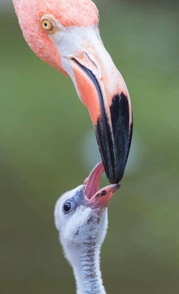Flamingo At The