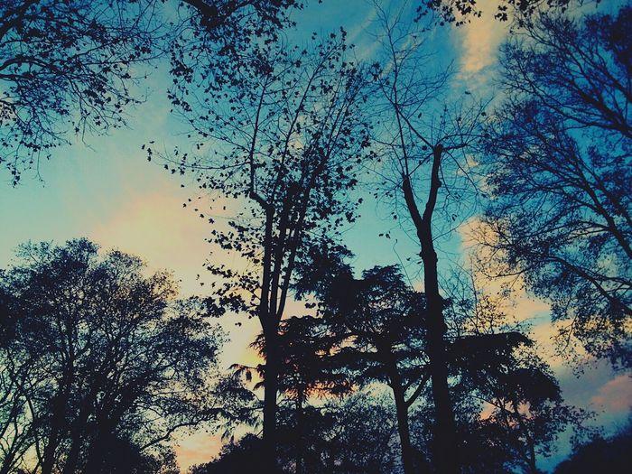 Gülhaneparkı Sky Gökyüzümavi