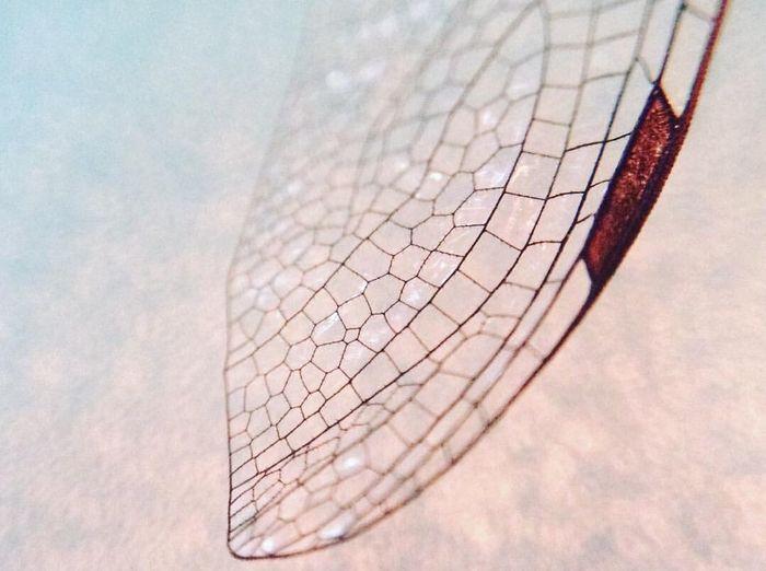 Close-up of damaged leaf against blurred background