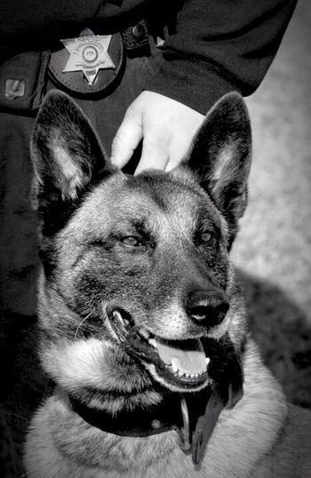 Deputy Ozzy... R.I.P.