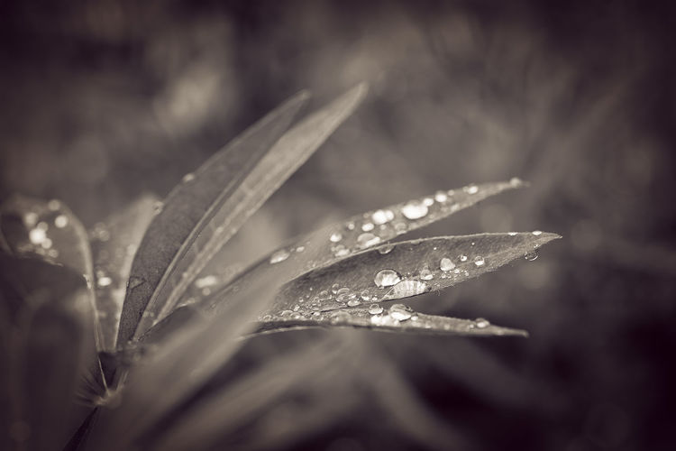 Waterdrops on leaf Beauty In Nature Close-up Detail Drop Fine Art Photography Leaf Macro Macro Photography Nature Nature Nature Photography Plant Selective Focus Water Weather Raindrops Rainy Days Rain